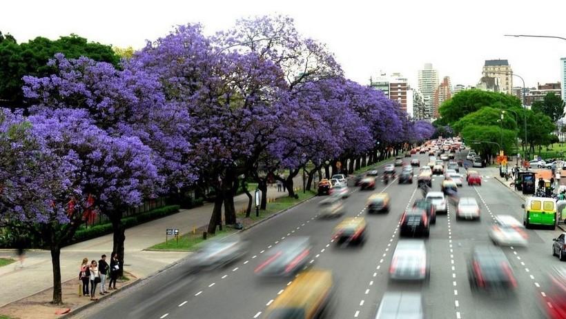 Buenas prácticas ganaderas en Argentina, Brasil y Paraguay